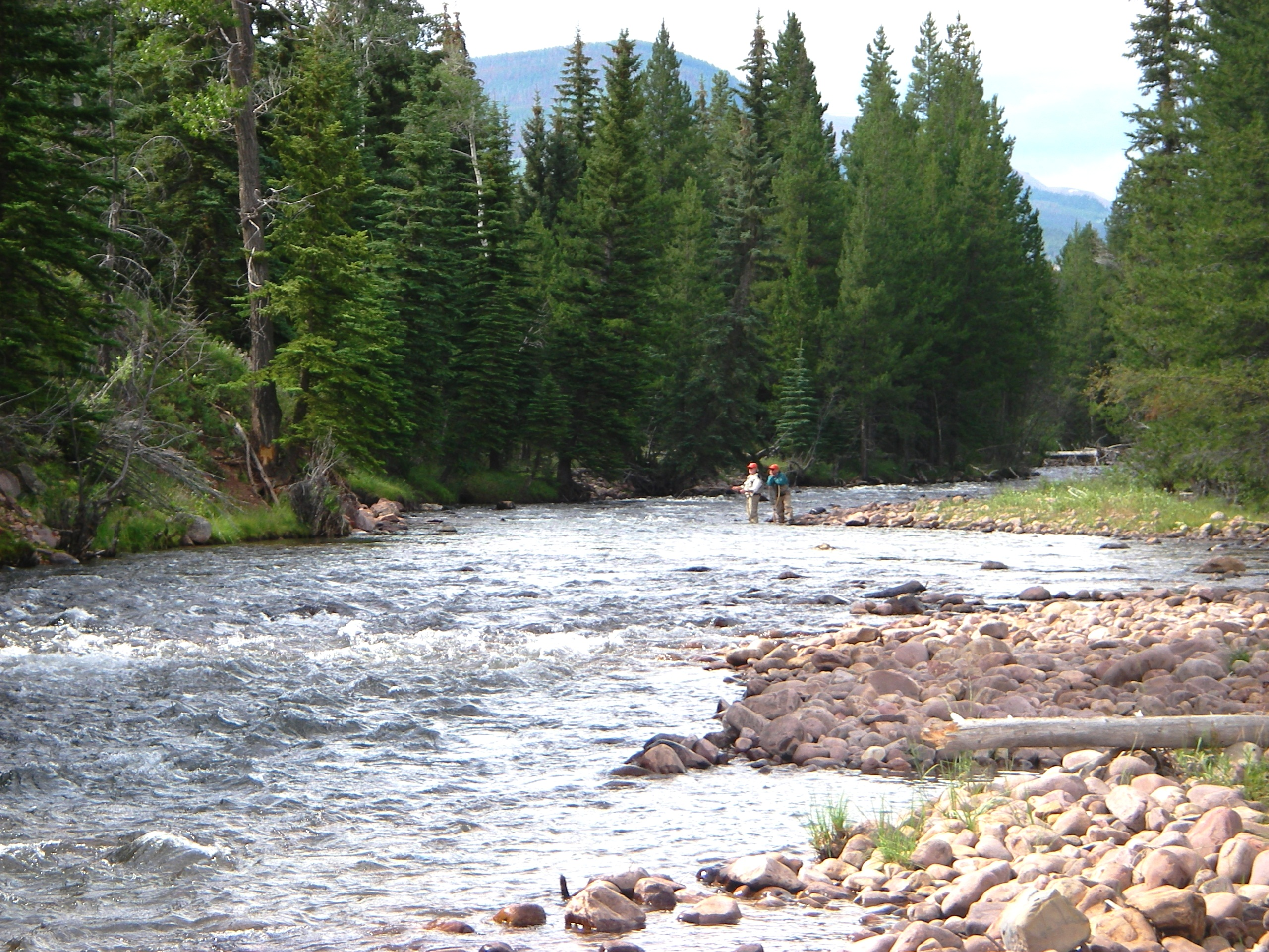 Utah fly fishing waters utah fly guides for Fish and stream