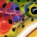 Rainbow Trout Watercolor by Tim Johnson