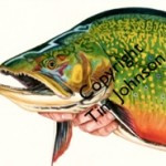 Water Color Brook Trout by Tim Johnson