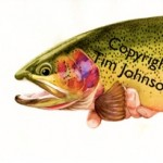 Water color cutthroat trout by Tim Johnson
