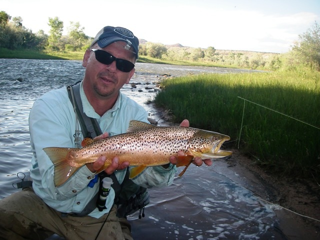 Utah fly fishing report june 29 utah fly guides for Trout fishing utah